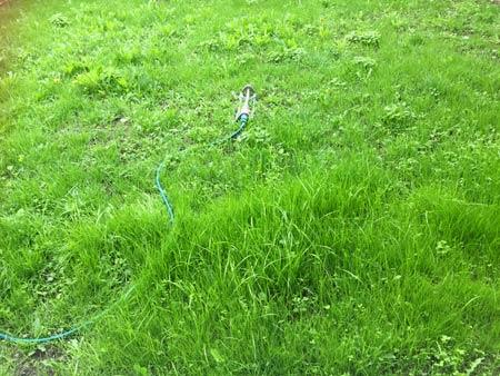 ニュージーランドで芝生をつくる