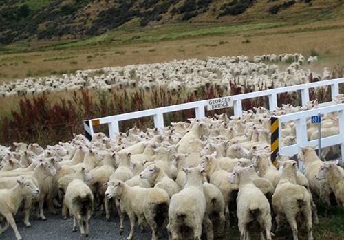 ニュージーランドの永住権必要書類