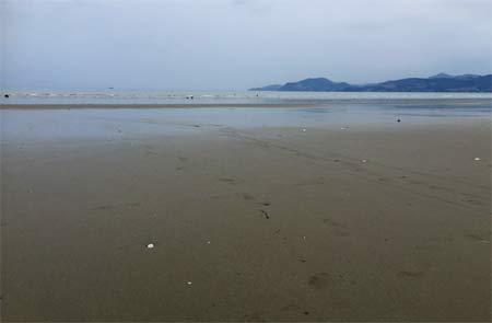 NZで潮干狩り