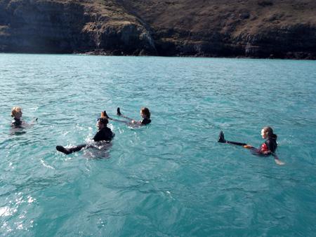 いるかと泳ぐ ニュージーランド