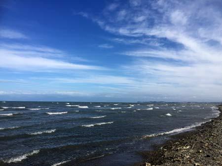 ニュージーランドで潮干狩り
