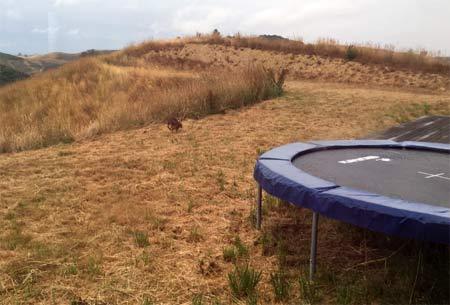 ニュージーランド 野生のうさぎ