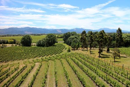 ワイン畑 ニュージーランド