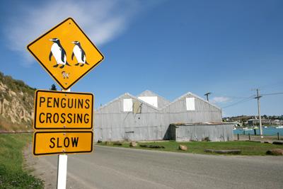 ニュージーランド ペンギン