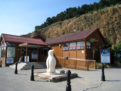 ペンギン見学ツアー オマル