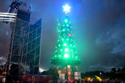 ニュージーランド クリスマスツリー