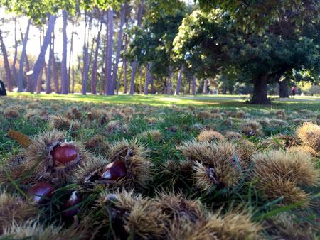 秋のニュージーランド