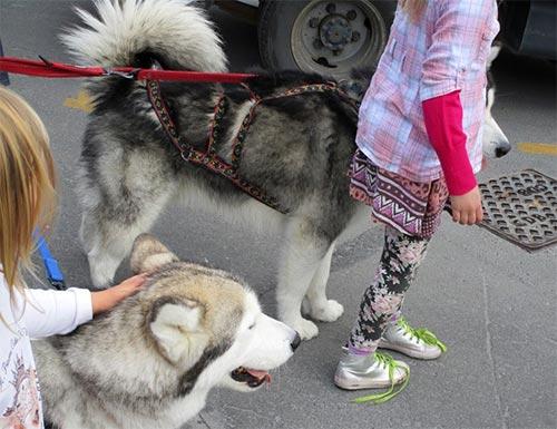 犬を学校に連れて来る