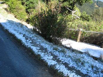 カシミヤ丘に雪が!